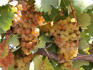 Weingebiet Cafayate